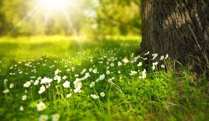 Baharın Müjdecisi Cemre Düştü